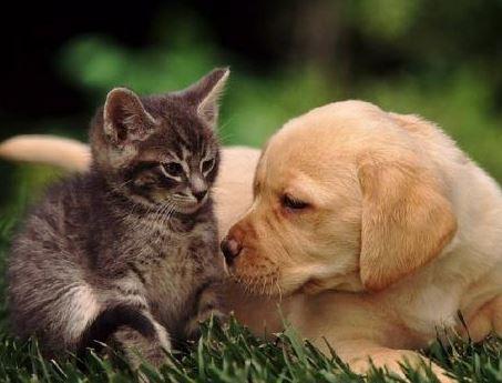 Основные причины нарушений сердечного ритма у собак